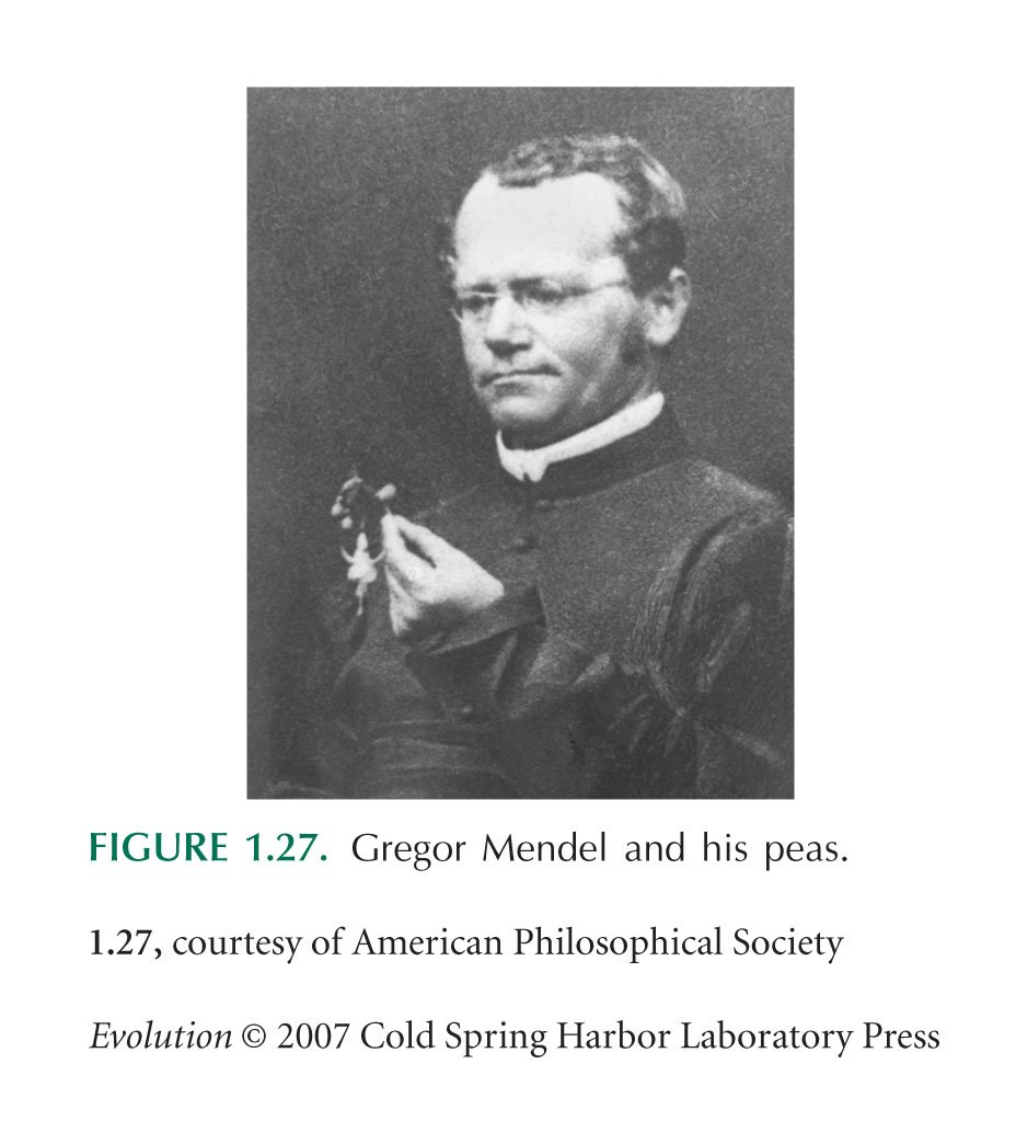 gregor mendel biography essay - biography of gregor mendel gregor mendel is considered the father of the discipline of genetics it is ironic that he bears this exposition, because gregor mendel never used the term gene or essay on gregor johann mendel - gregor mendel was born in heinzendorff in 1822 and died in 1884.