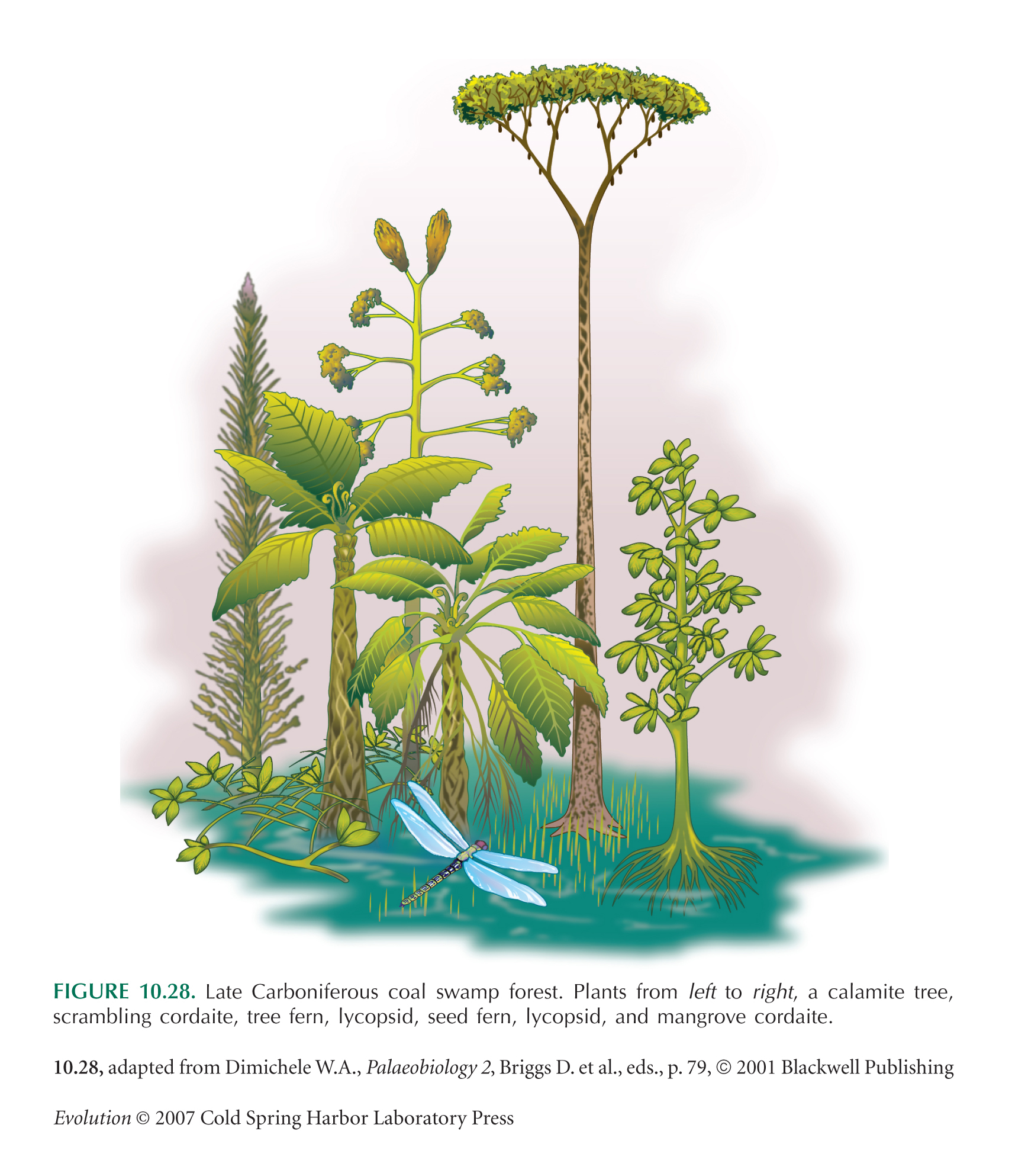 last universal common ancestor pdf