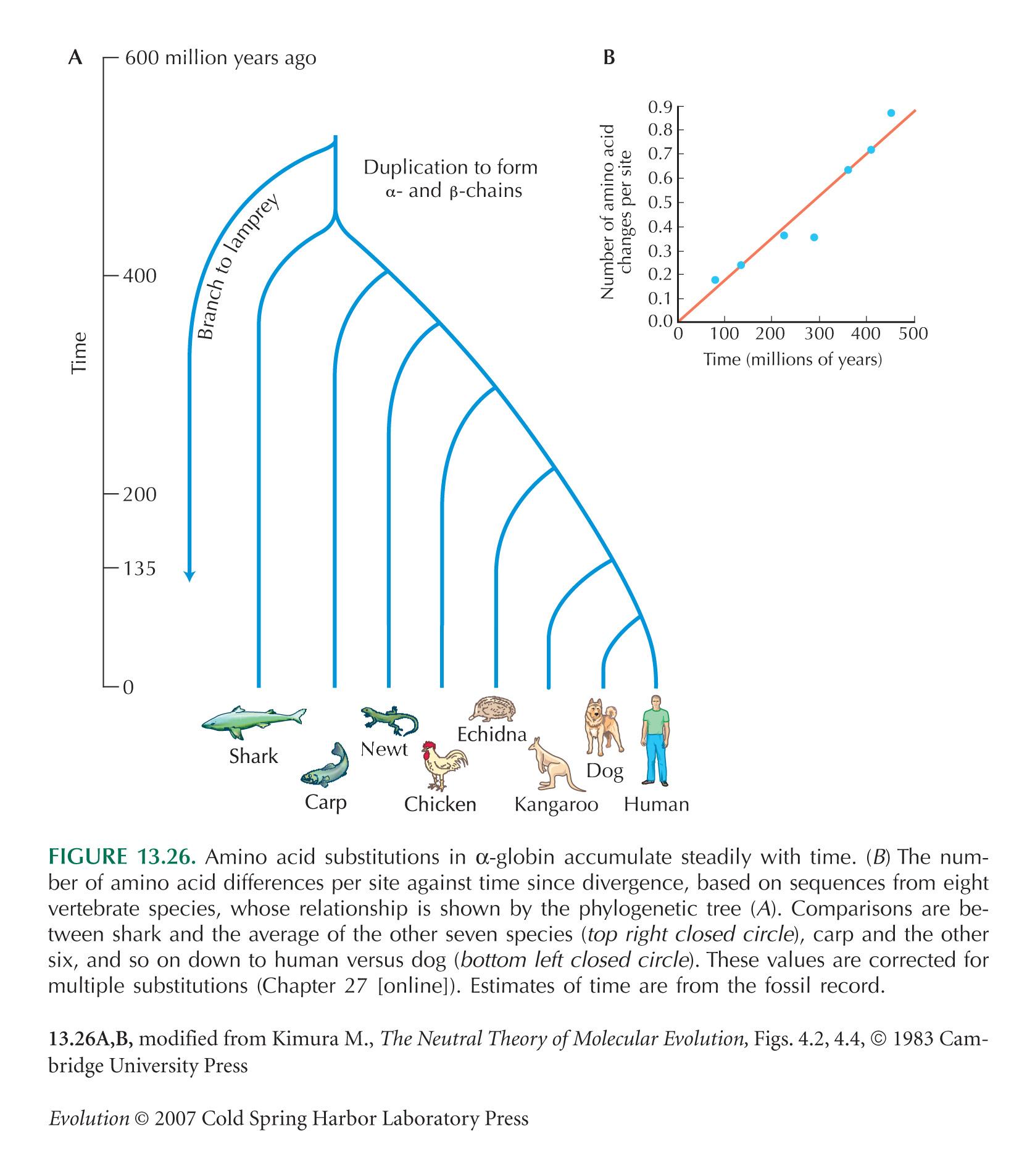 Data on divergence between   Molecular Clock Human